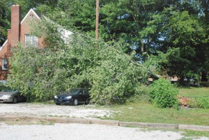 Wind storm rakes Powell, leaves downed trees and power outage