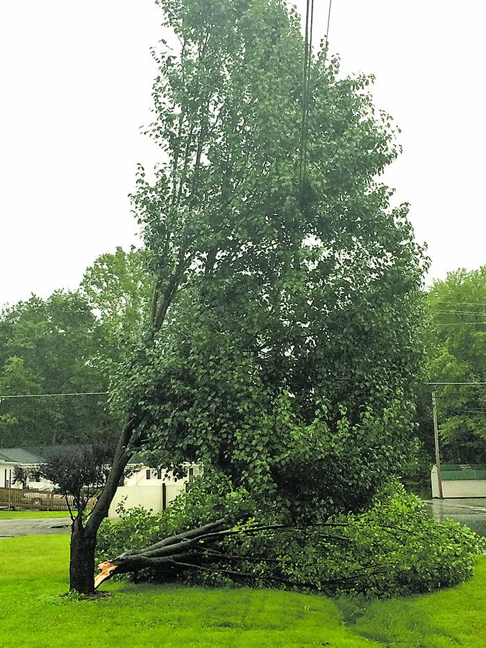 Damage-Tree-Clay City