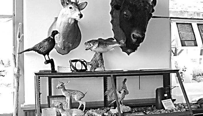 Social-RRM Animals